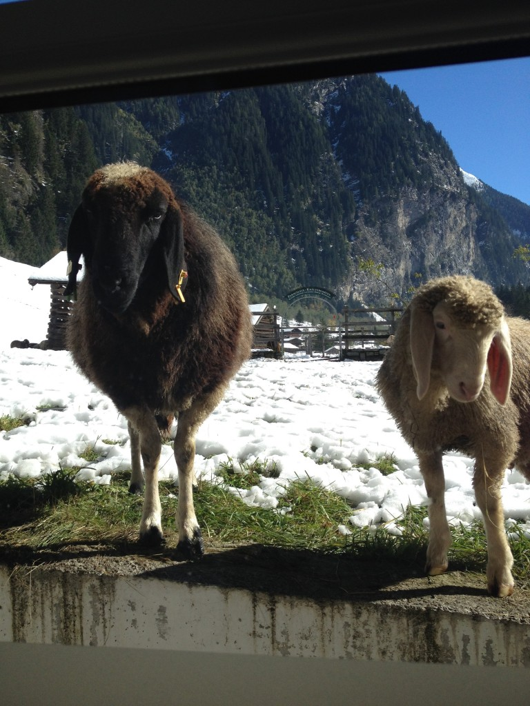 hotel gruner baum austria bad gastein sheep